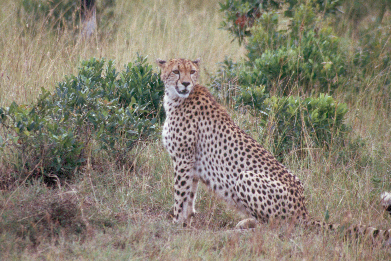 masai-Scan178
