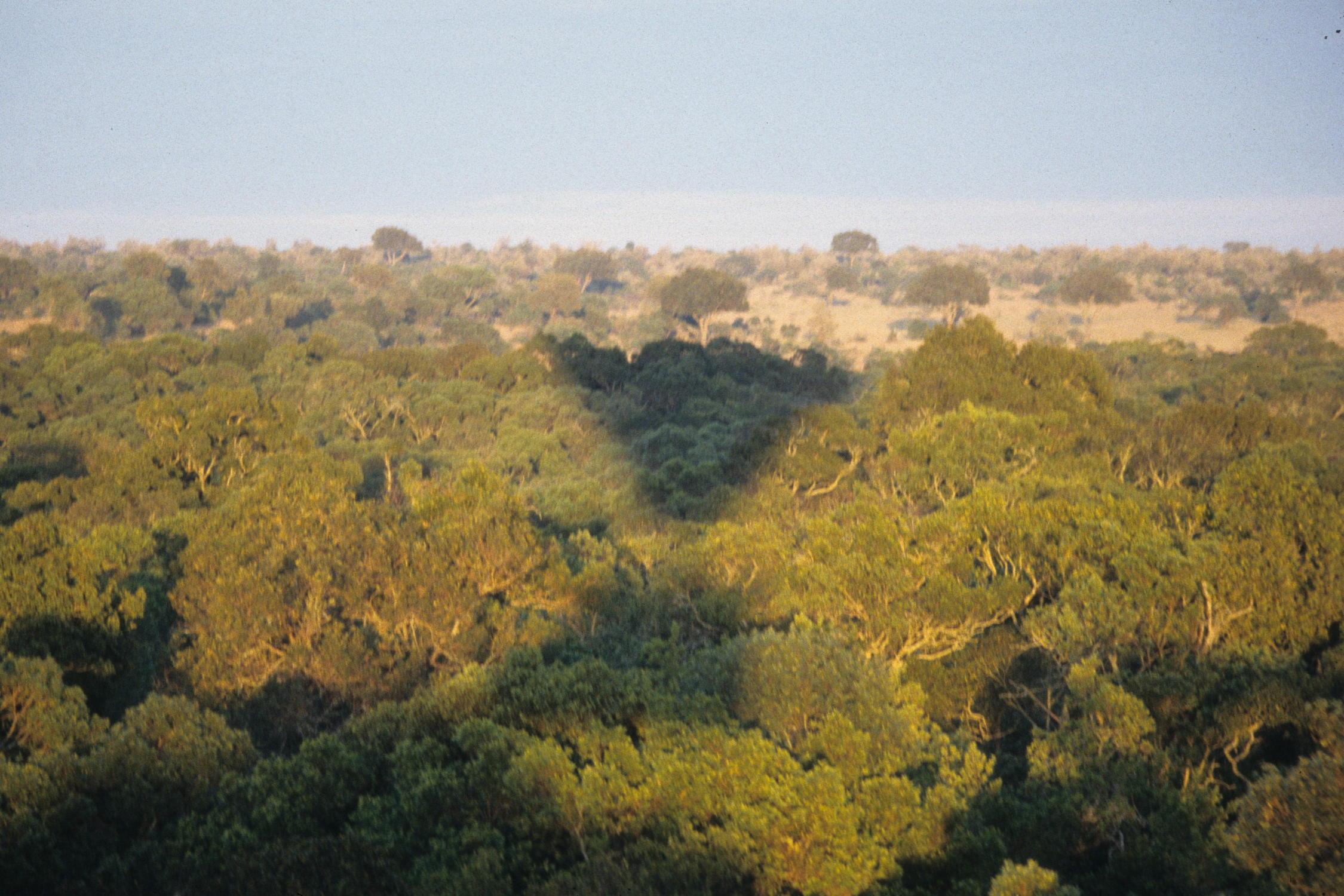 masai-baloon-safari-Image27