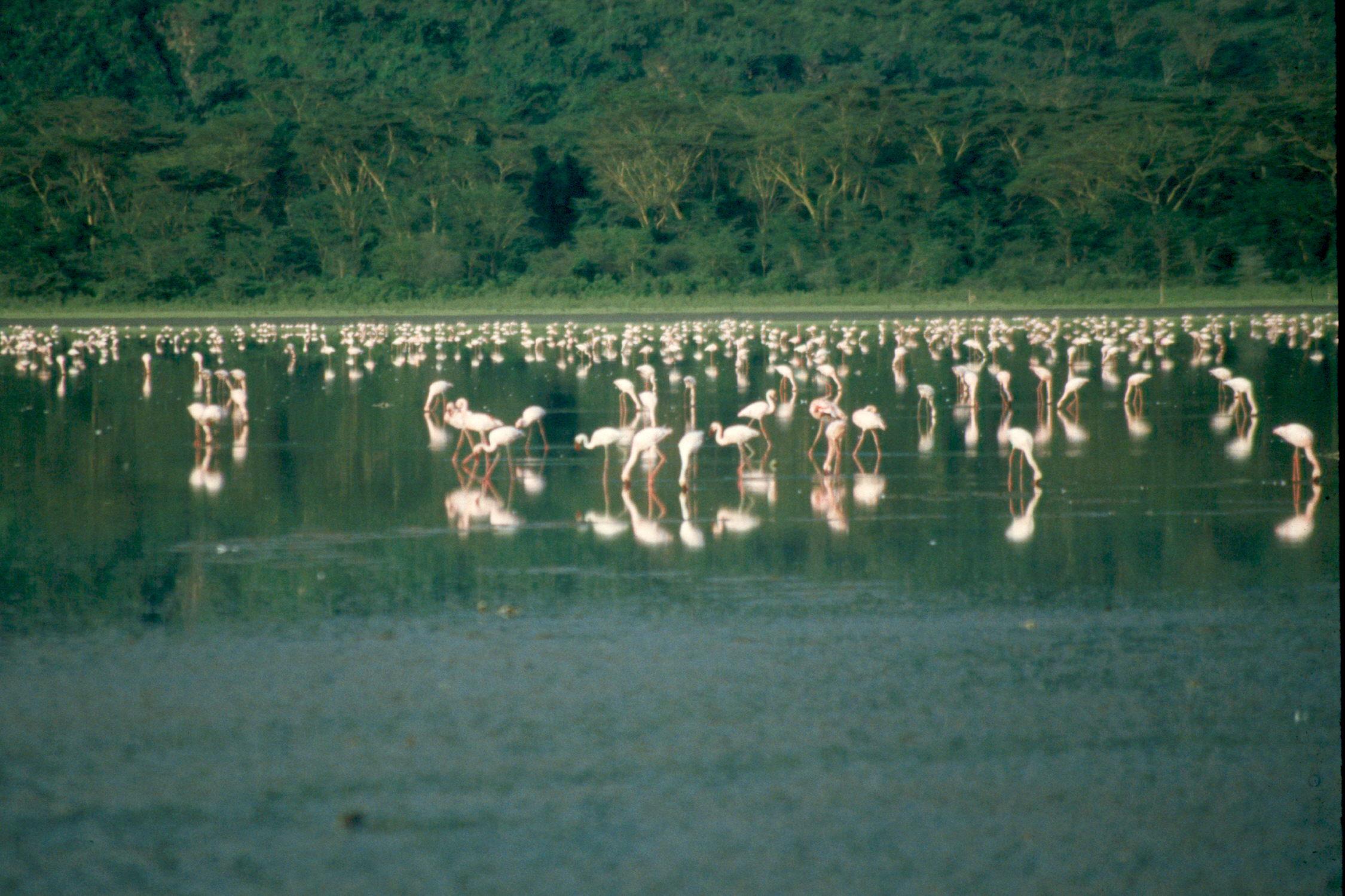 nakuru-lake-flamengo-16