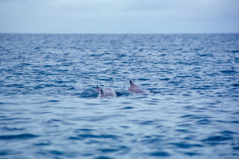 kizimkazi-dolphin-tour-15