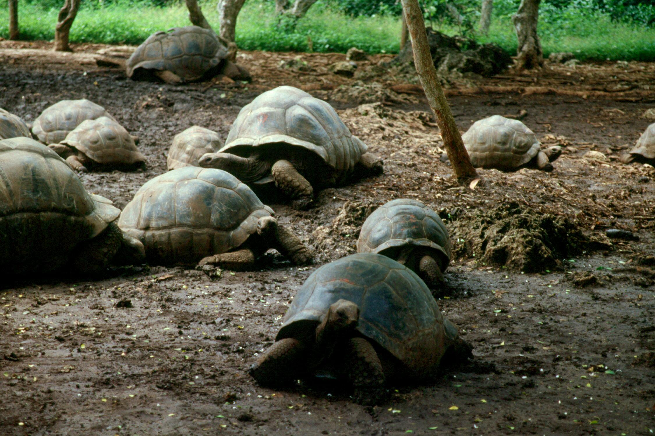 zanzibar-changu-island-16-turtle