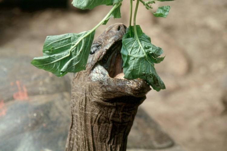 zanzibar-changu-island-22-turtle