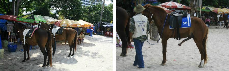chobl-huahin-horse