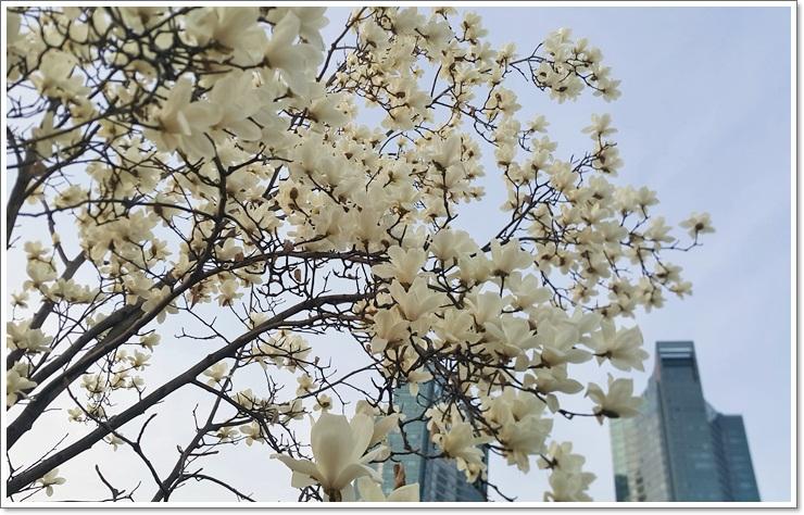 봄 033