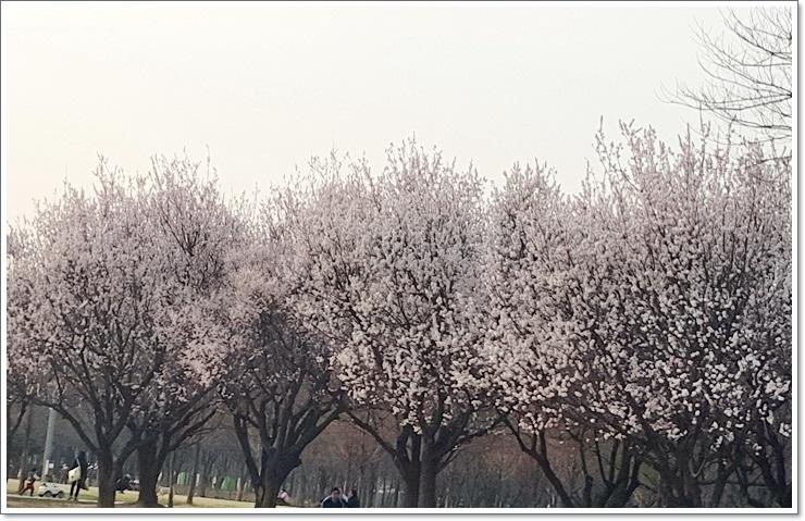 봄 041