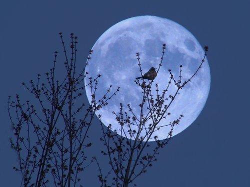 moon_34593.jpg