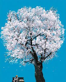 흐드러진 벚꽃 아래 잠시 한숨 돌린 스님을 그린 이철원의'봄·영암'.