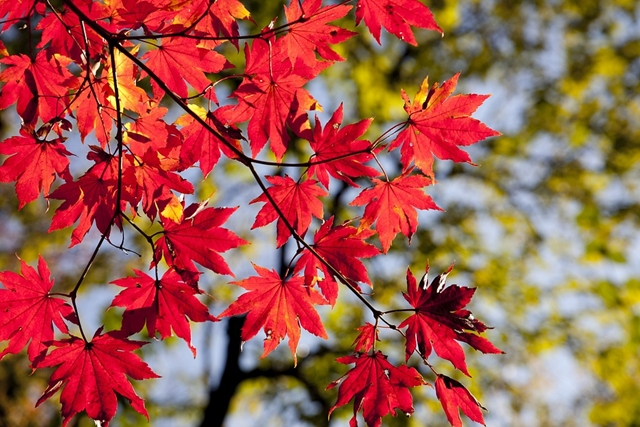 autumn-2789234_960_720