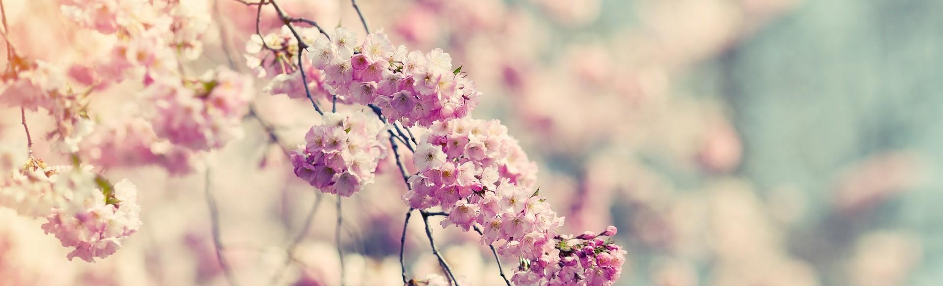 나의 정원