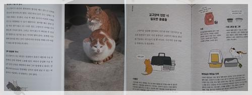 고양이용어1