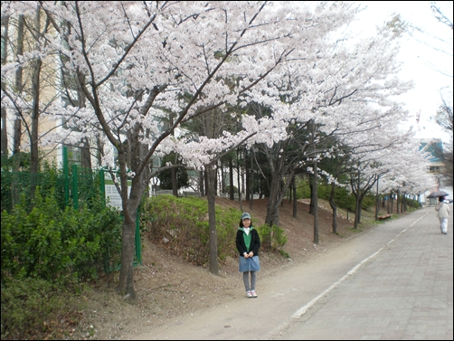가벚꽃16.JPG