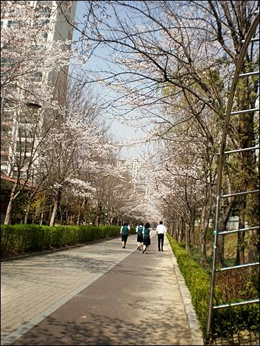 가벚꽃2.JPG