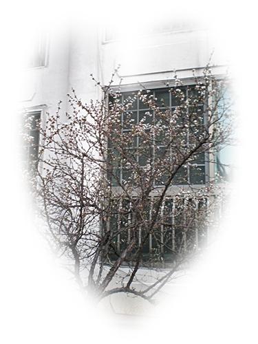 건영살구10[2].JPG