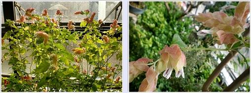 과천식물원12.jpg