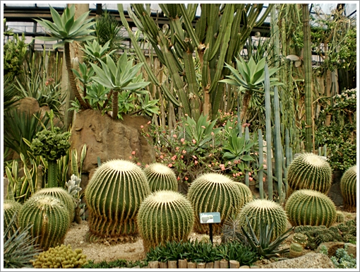 과천식물원3.JPG