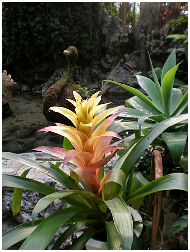 과천식물원9.JPG
