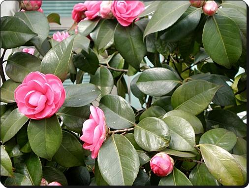 꽃2[1].JPG