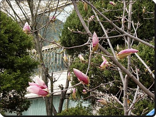 꽃3.JPG