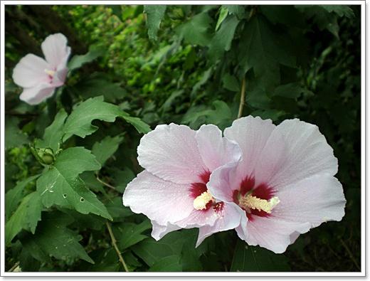 꽃9.JPG