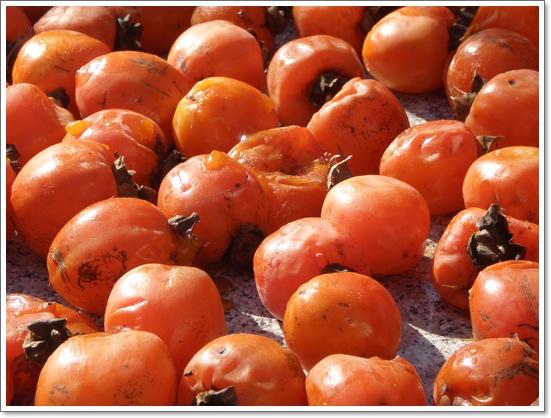 감나무10.JPG