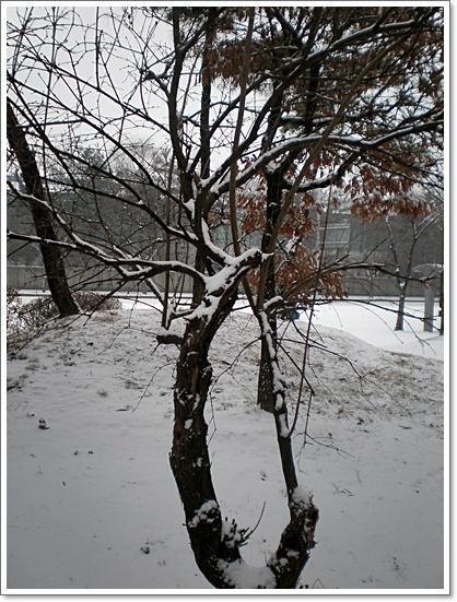 눈13.JPG