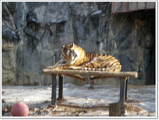 동물원15.JPG
