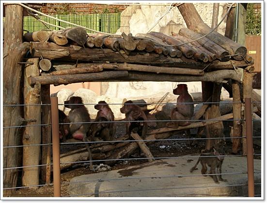 동물원23.JPG