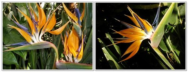 식물원2.jpg
