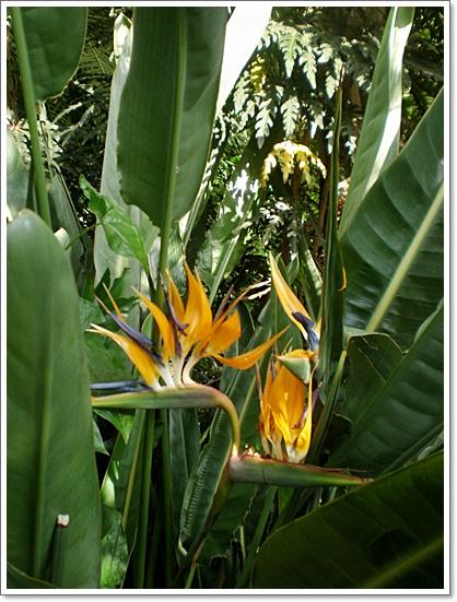 식물원3.JPG