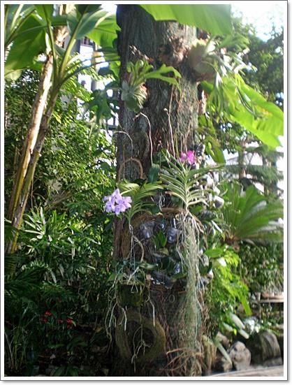 식물원11.JPG