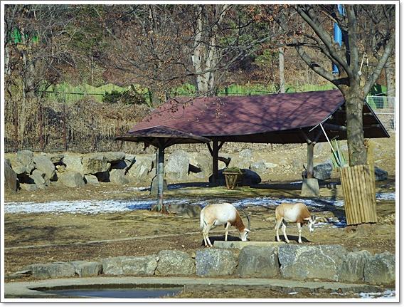 동물원3.JPG