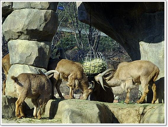 동물원4.JPG