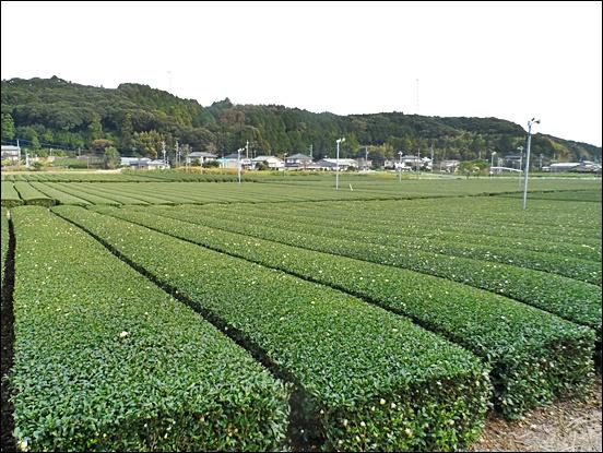 시즈오카22.JPG