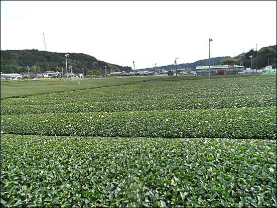 시즈오카25.JPG
