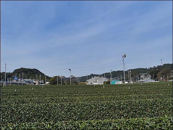 시즈오카30.JPG