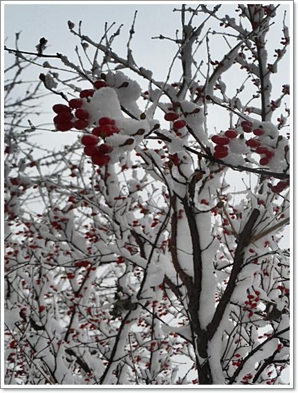 눈이2.JPG
