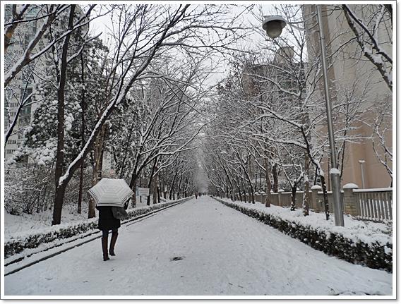 눈이6.JPG