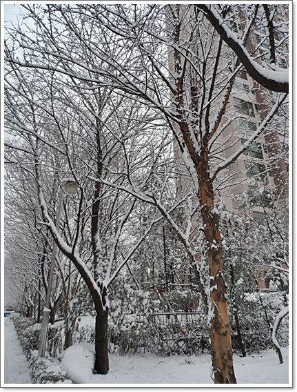 눈이7.JPG