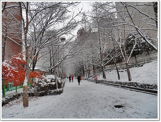 눈이11.JPG