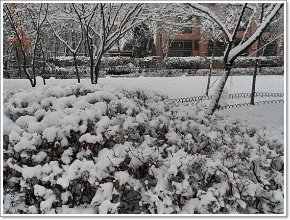 눈이19.JPG
