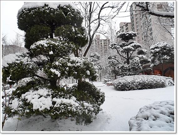 눈이20.JPG