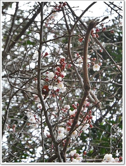 봄제주5.JPG