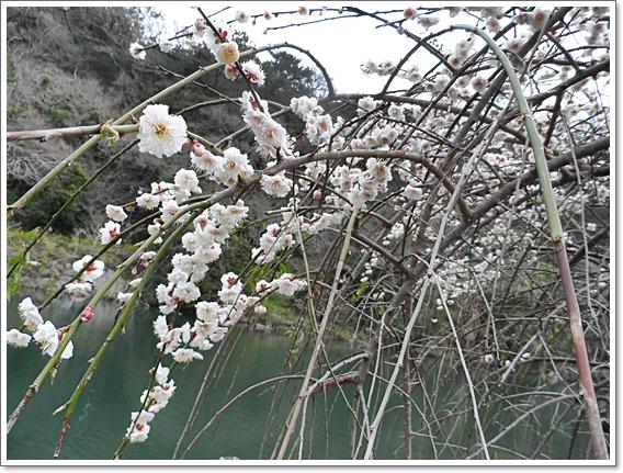 봄제주6.JPG