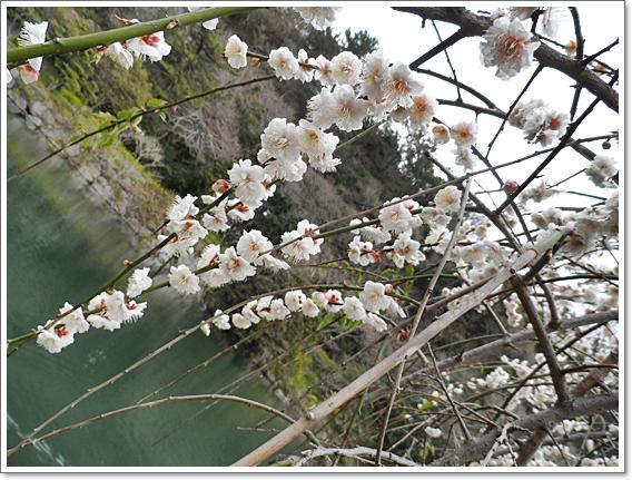 봄제주7.JPG