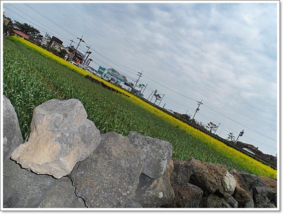 봄제주14.JPG