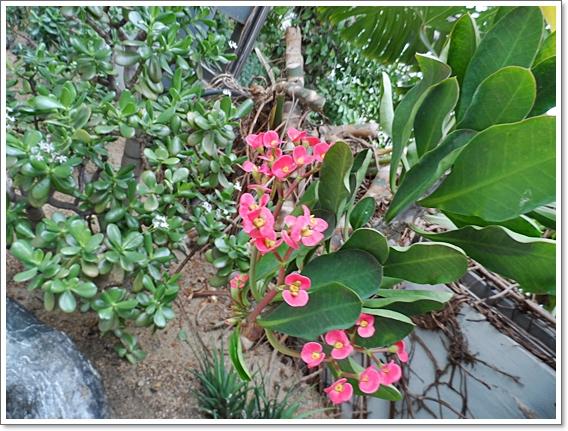 식물원5.JPG
