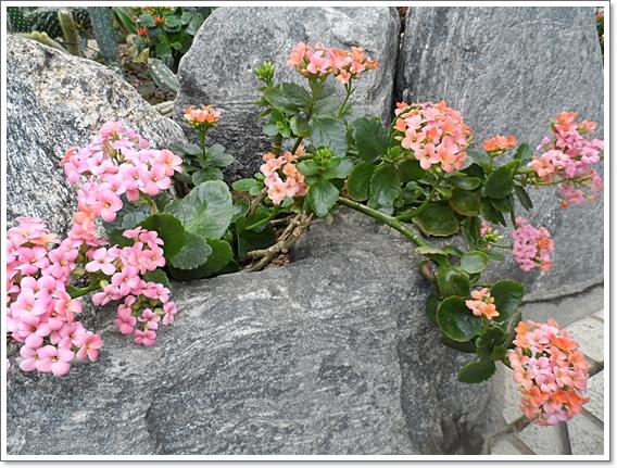 식물원8.JPG