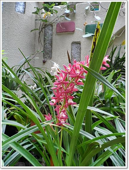 식물원12.JPG