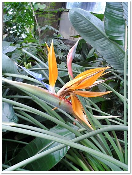 식물원17.JPG
