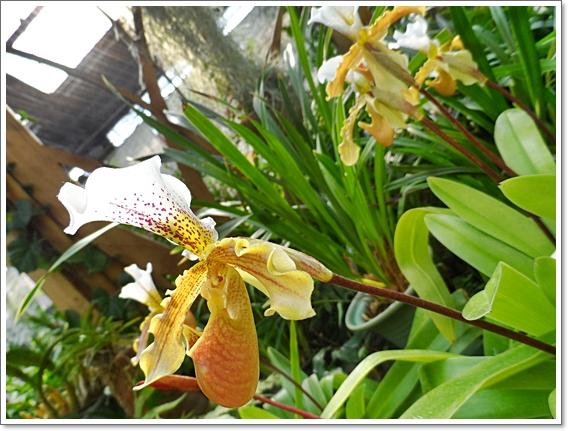 식물원22.JPG